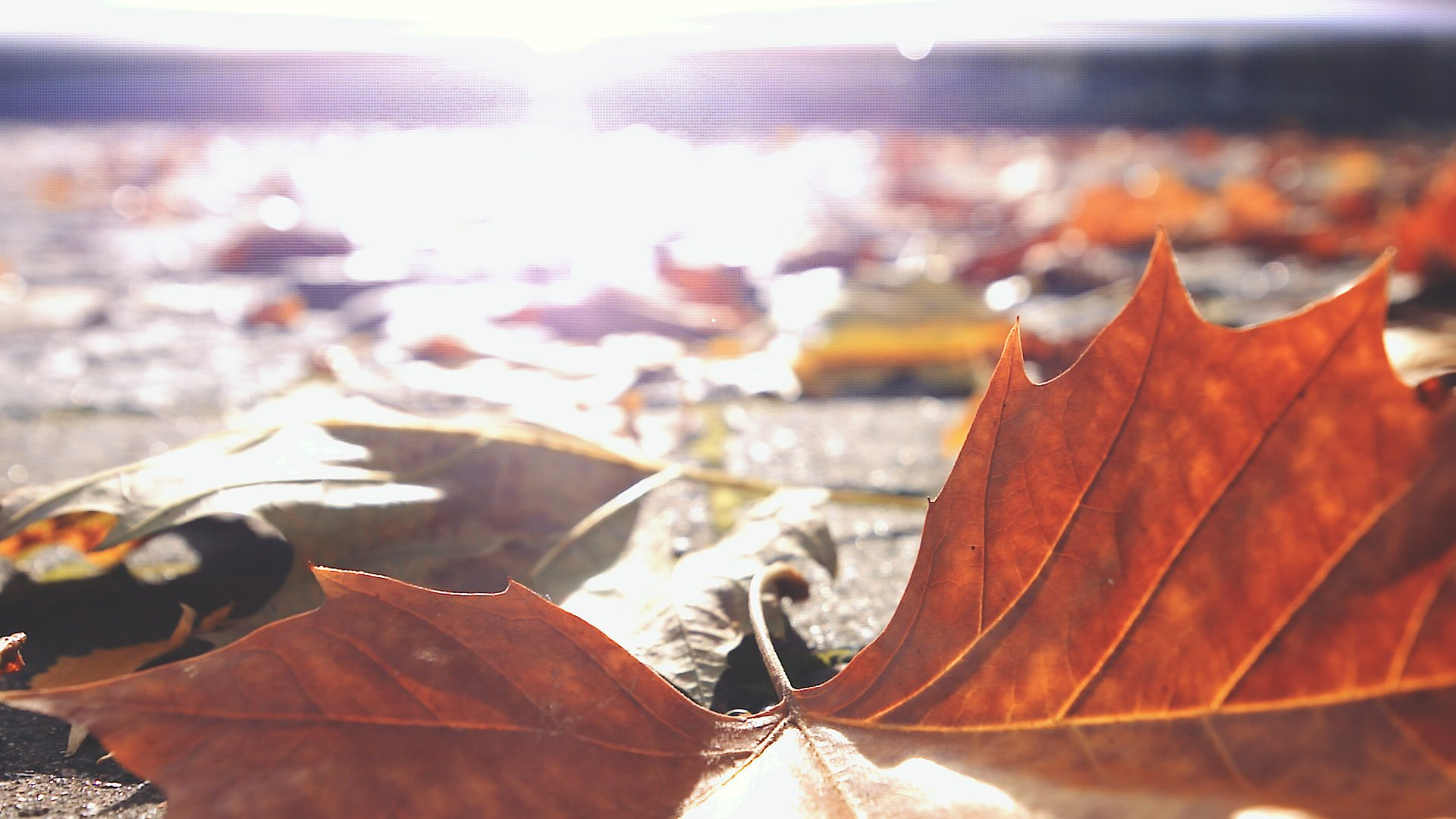 Leaves and Bokeh