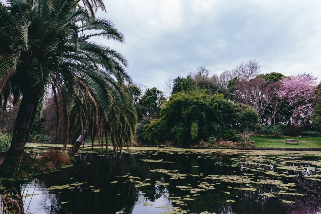 How I improve my photography: Melbourne Botanical Gardens